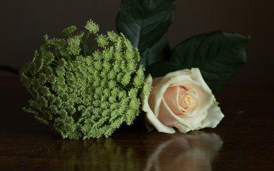 Stilleven met roos